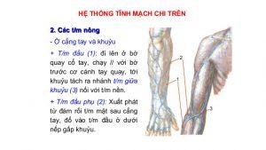 tĩnh mạch động mạch cánh tay
